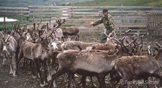 4-Peuple-sami-aujourd'hui