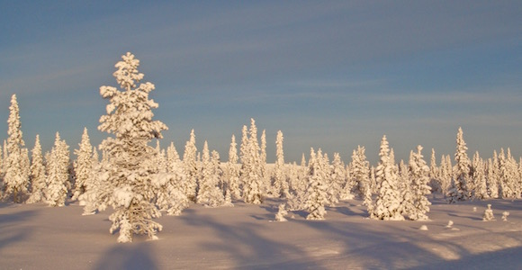 Suède-randonnee-raquettes Laponie