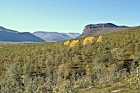 Randonnée Laponie suédoise